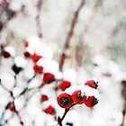 Berries beneath Snow in Denmark 2 by DanielleQ