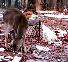 Sharing A Meal..My chickens forage with a squirrel, and a motherless baby deer! by NatureGreeting Cards ©ccwri