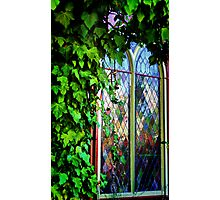 Stained Glass and Ivy Photographic Print