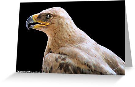 TRUE EAGLES - THE TAWNY EAGLE – *Aquila rapax* by Magaret Meintjes