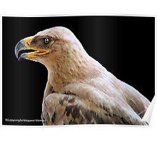 TRUE EAGLES - THE TAWNY EAGLE – *Aquila rapax* Poster