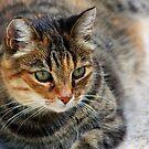 Burton - The She-Cat by Teresa Zieba