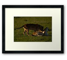 play time.. Framed Print