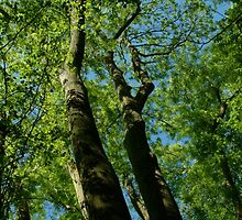 Tall Trees by newbeltane