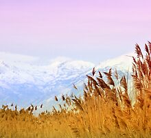 Lone Peak Wilderness Area - Backdrop by Ryan Houston