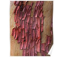 Abstract Bark Poster