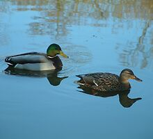 Ducks by newbeltane