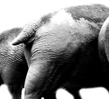 Elephant Ends by Deanna Roberts Think in Pictures