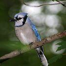 Blue Beauty  by Bonnie Robert