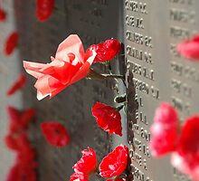 Poppies on the Memorial War (1) by blackadder