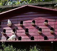 The big dovecote, Alnwick Gardens, Northumberland by BronReid