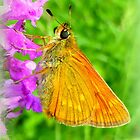 European Skipper ~ Thymelicus lineola by ©The Creative  Minds