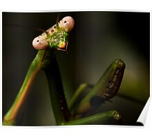 Posing Praying Mantis Poster