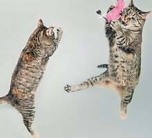 MEOW Playing Cats by eelagreen