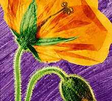 Pressed Welsh Poppy Flower by Paul Williams by Paul Williams