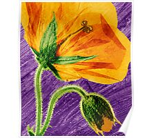 Pressed Welsh Poppy Flower by Paul Williams Poster