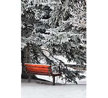 Frosty Delight Photographic Print