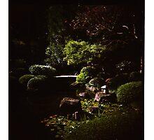 Brisbane Botanic Gardens Photographic Print
