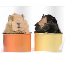 Guinea pig babies Poster