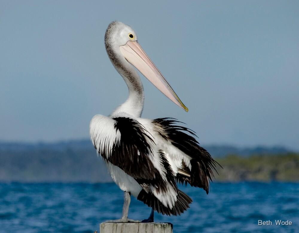Pelican Paradise - North Stradbroke Island Qld Australia by Beth  Wode