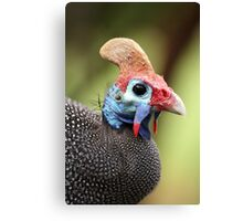 Guineafowl Portrait - Petrusburg, Free State, South Africa Canvas Print