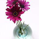 three purple daisies in spherical vase by OldaSimek