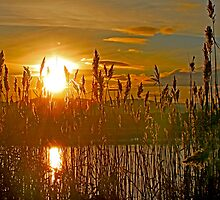 Sedge Sunset by sandmartin