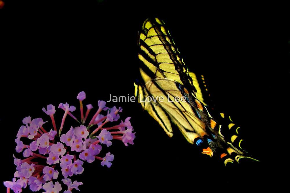 Landing by Jamie Lee