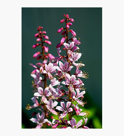 Flowering Up Photographic Print
