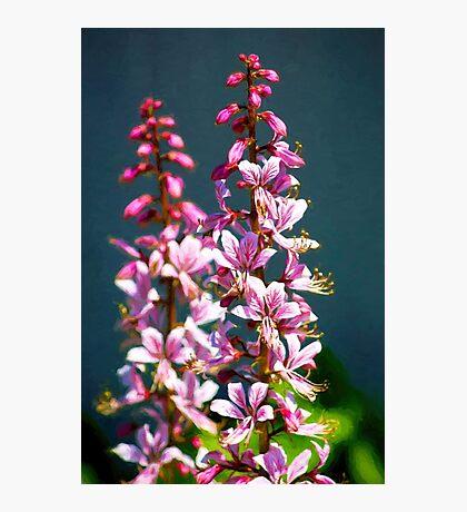 Flowering Up v2 Photographic Print