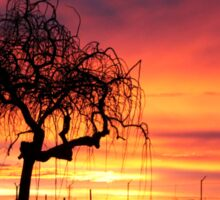 Tree skeleton in the sunset...  Sticker