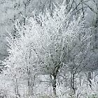 Frosty Trees by Colin Morley