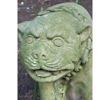 Statue in garden Photographic Print