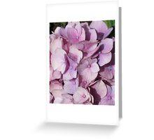Light Purple Hydrangea Greeting Card