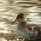 Mallard Duckling by Franco De Luca Calce