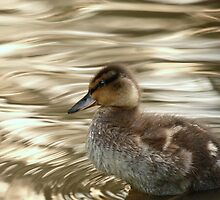 Mallard Duckling by Franco De Luca Calce