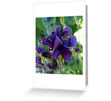 Deep Blue Columbine Greeting Card