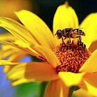 Ode to Summer by Robin Webster