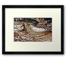 Strong Bark Framed Print