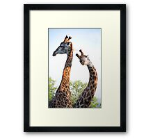 Walking with Giraffes - South Africa Framed Print
