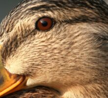 Female Mallard Sticker