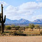 Cactus In Arizona by Elizabeth  Lilja