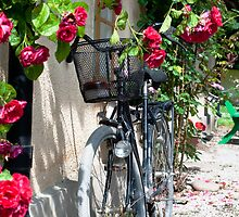 Bicycle and Roses by robert cabrera