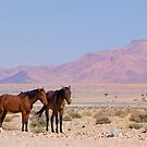 The Wild Horses of Namibia Africa by Beth  Wode