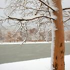 Snowy tree by i l d i    l a z a r