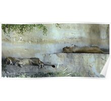 Trundle Bed: Just Lion Around Poster