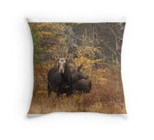 Moose - Algonquin Park, Canada Throw Pillow