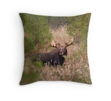 Moose in Rut - Algonquin Park, Canada Throw Pillow