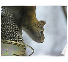 Having Lunch at the Squirrel Proof Feeder Poster