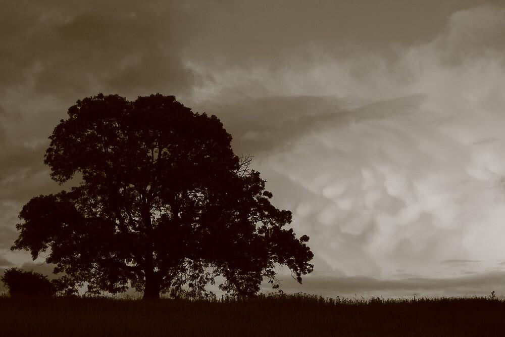 Mammatus Clouds by Jane Burridge